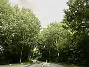 Westerdreef bomen